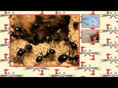 Visit this site http://www.fortworth.pestservicenetwork.com/ for more information on Fort Worth Pest Service. There has been an increasing demand for control of Fort Worth Pest Service, thanks to the awareness amongst people about hygiene and cleanliness. These services are quintessential when there is severe infestation of pests in the offices, homes, lawns or gardens.