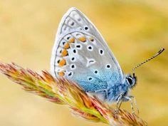 Mooie vlinder met op ajour lijkende vleugels.