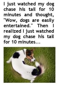 lol. . . I don't have a dog, but, I have done this with my kitty.  :)