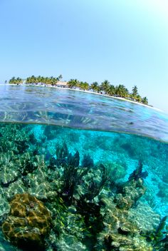 A peek at the underwater paradise that you can experience on tour with #robertsgrove #belize #divingtours