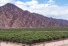 """What's better than drinking wine from Argentina? It's visiting where the wine comes from. Here's a look at winery for Bodegas Vistandes along the """"La Ruta del Vino."""""""