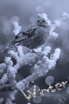 gif animated gif mobile animation for mobile animation winter анимация Hello Winter, Winter Beauty, Winter Season, Animated Gif, Winter Wonderland, Wildlife, Birds, Animation, Seasons