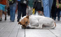Certamente todas as pessoas que amam os animais em algum momento se perguntou o quanto sofre um animalzinho abandonado na rua. É bem triste a situação de qualquer animal domesticado que não tem ao…