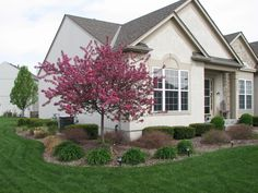 Dwarf Crabapple Trees are also an early bloomer. The dwarf varieties don't get out of control nor make a mess. They anchor a corner with style and color.