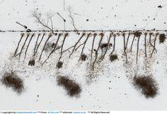 Kacper Kowalski aerial photography / zdjecia lotnicze Kacpra Kowalskiego - harsh winter