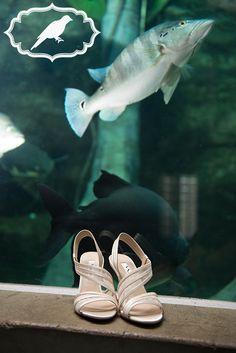 Toledo Zoo Aquarium wedding - Photos by Luckybird Photography