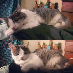 Moneypenny is getting so big 💚😻 #Moneypenny #kitten #cat #catsofinstagram