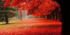 Red foliage in park ultra hd wallpaper beautiful nature wallpaper, scene Autumn Scenery, Autumn Nature, Autumn Art, Nature Hd, Fall Wallpaper, Scenery Wallpaper, Leaves Wallpaper, 1080p Wallpaper, Wallpaper Pictures