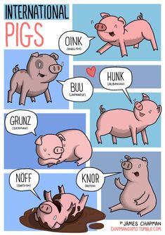 Los cerdos japoneses no dicen 'oink'