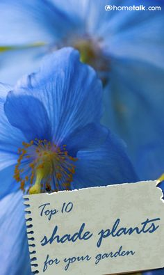 love the Home talk website. No sun in your garden, no problem. Check them out for the TOP 10 Shade Plants for Your Garden!I love the Home talk website. No sun in your garden, no problem. Check them out for the TOP 10 Shade Plants for Your Garden! Shade Flowers, Shade Plants, Sun Flowers, Shade Garden, Garden Plants, Vegetable Garden, Outdoor Plants, Outdoor Gardens, My Secret Garden