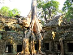 Angkor Wat, Cambodia - Beautiful Places to Visit Places Around The World, Oh The Places You'll Go, Places To Travel, Around The Worlds, Beautiful Places To Visit, Beautiful World, Angkor Wat Cambodia, Vietnam Tours, To Go