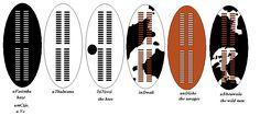 The Zulu regiments - Zulu Total War South African Tribes, Zulu Warrior, All About Africa, War Image, Total War, Sword And Sorcery, African Culture, British Army, Military Art