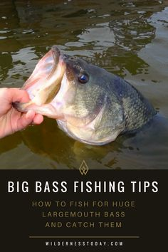 Lean how to land a lunker next time you are out bass fishing.- Lean how to land a lunker next time you are out bass fishing. Lean how to land a lunker next time you are out bass fishing. Bass Fishing Tips, Best Fishing, Trout Fishing, Fishing Boats, Fly Fishing, Fishing Tricks, Fishing Videos, Fishing Basics, Fishing Reels