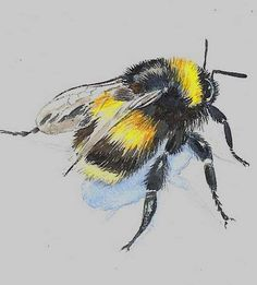 ≗ The Bee's Reverie ≗ Bee. Bee Pictures, I Love Bees, 1 Tattoo, Bee Art, Bees Knees, Bee Keeping, Watercolor Paintings, Watercolours, Watercolor Tattoo