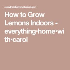 How to Grow Lemons Indoors - everything•home•with•carol
