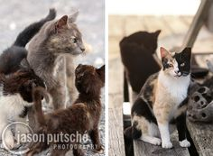 Incredible Photos Document Secret Lives of Street Cats Check out Alley Cat Allies website for more information on how you can help !