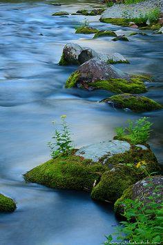 Missoula, Montana    Rattlesnake Creek (by Julie Lubick)