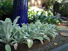 User Galleries - Formboss Metal Garden Edging for lawns, garden beds and Driveways