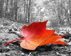 black and white with a splash of color   This is a tutorial on how to make a color splash image with gimp. if ...