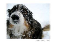 Dog Loves Snow