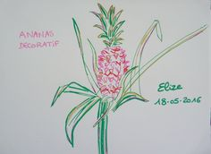 Ananas décoratif (rose) #dessin aux crayons feutres http://www.pigmentropie.fr