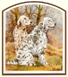 English Setters in Autumn