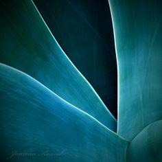 Agave Abstract 8 by ~joannakossak