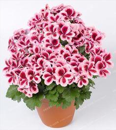 Resultado de imagem para flores de várias cores