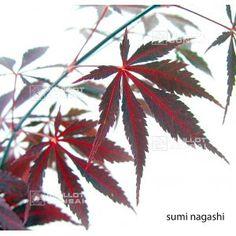 SUMI NAGASHI