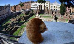 Roman kitty!