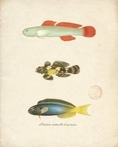 awesome vintage sea-life prints