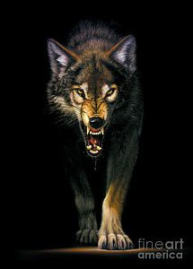 Stalking Wolf Art Print by MGL Studio - Chris Hiett