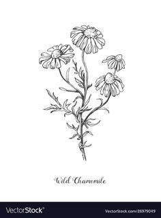 Daisy flower line art drawing hand drawn vector image on VectorStock Daisy Flower Drawing, Flower Line Drawings, Botanical Line Drawing, Botanical Tattoo, Flower Sketches, Black Line Tattoo, Line Tattoos, Tattoo Drawings, Art Drawings