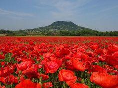 Megnézed ezt a fotót, és ott akarsz lenni most! Kattints a folytatásért! Poppy Photo, Hungary Travel, Heart Of Europe, World Images, City Landscape, Countries Of The World, Budapest, Beautiful Places, Places To Visit
