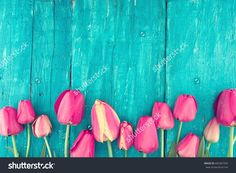 https://image.shutterstock.com/z/stock-photo-frame-of-tulips-on-turquoise-rustic-wooden-background-spring-flowers-spring-background-valentine-405387334.jpg