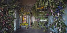 The Good Reason This Abandoned Home Was Filled With Flowers  - HouseBeautiful.com