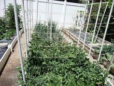 Getting Your Garden Ready? Hanging Produce Trellis Out Of PVC! #DIY #garden