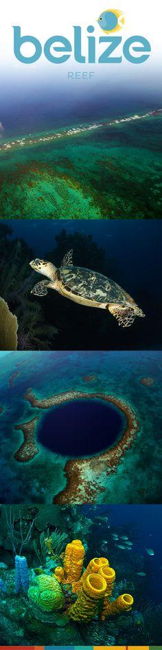 #BelizeReef
