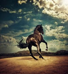 "Job 39:19-25 19 ""Do you give the horse his strength or clothe his neck with a flowing mane? 20 Do you make him leap like a locust, striking terror with his proud snorting? 21 He paws fiercely, rejoicing in his strength, and charges into the fray. 22 He laughs at fear, afraid of nothing; he does not shy away from the sword."