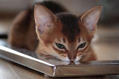 Cats, Instagram Posts, Animals, Gatos, Animais, Animales, Kitty Cats, Animaux, Animal