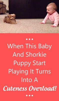 When This Baby And Shorkie Puppy Start Playing It Turns Into A Cuteness Overload!