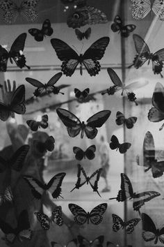 Imagen de butterfly and black and white aesthetic wallpaper Mariposas uploaded by Moira on We Heart It Black Aesthetic Wallpaper, Gray Aesthetic, Black And White Aesthetic, Aesthetic Collage, Aesthetic Iphone Wallpaper, Aesthetic Wallpapers, Black And White Picture Wall, Black And White Pictures, Butterfly Black And White