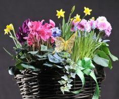 Cos rachita Mix flori de sezon la ghiveci (se pot pastra o perioada mai lunga) 120 lei + TVA, CorporateBaskets. Cos, Plants, Gifts, Presents, Plant, Favors, Planting, Planets, Gift