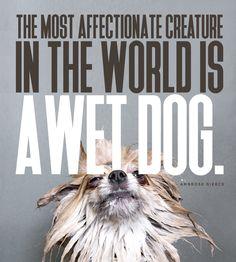 Design Quotes, Quotable Quotes, Quotations, Creatures, Artist, Movie Posters, Qoutes, Artists, Quotes