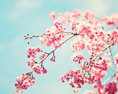 """Floral Photography - pink blue aqua flower wall art print spring nature photo picture pastel, 16x20, 11x14, 8x10 Photograph, """"Spring Melody""""..."""