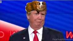 Donald and Glubschi
