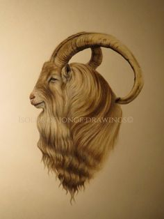 """""""Gamlefar"""", """"Old pa"""". By Isolde de Jonge. Pencil and colour pencil on paper."""