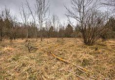 Durch die Aufgabe der Beweidung entsteht eine Rasenbrache, das heißt, hochwüchsige Gräser und Sträucher und schließlich Bäume kommen auf.