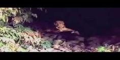 Ripresa originale di una creatura - Video mandato in onda su Italia 1