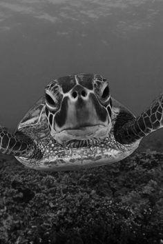 #turtle #selfie #ocean #dive